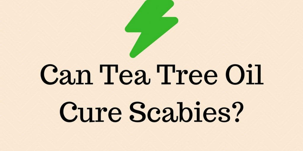 3 Things to Know About using Tea Tree Oil For Scabies